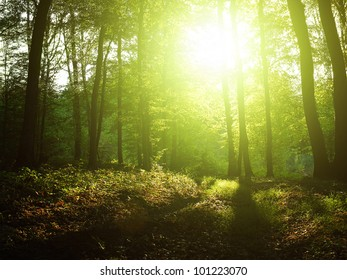 Sunlight in the forest.
