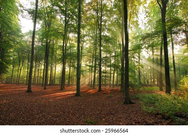 Sunlight in forest at early morning
