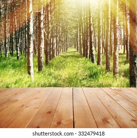 Sunlight in forest. Nature background