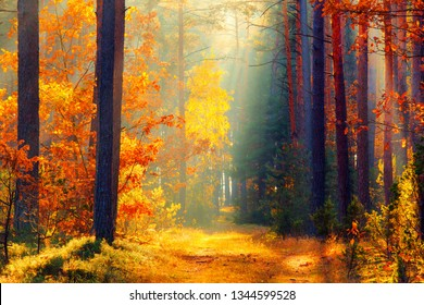 Sunlight in forest. Path in fall forest. Fall forest. Autumn landscape.