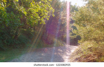 sunlight in the forest, sun rays in a pine forest
