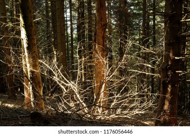 Sunlight in forest trees background