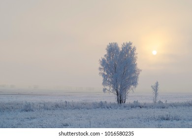 sunlight, freezing fog and ice-covered trees