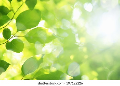 Sunlight And Fresh Green