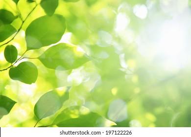 日差しと新鮮な緑