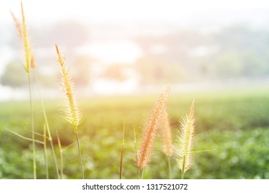 Sunlight of grass.nature landscape with meadow