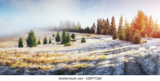 Sunlight in the green forest early morning. Beautiful autumn road. Fantastic fog in the mountains. October in the early winter days. Carpathian. Ukraine, Europe.