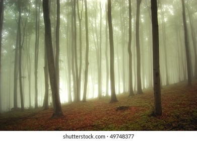 sunlight in a green forest with fog