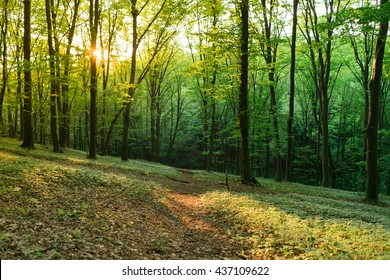 Sunlight in the green forest. Forest landscape.
