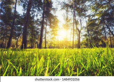 Sunlight in the green forest. Summer and spring time nature. Close up view of green grass