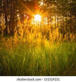 Sunlight In The Green Forest, Summer Time