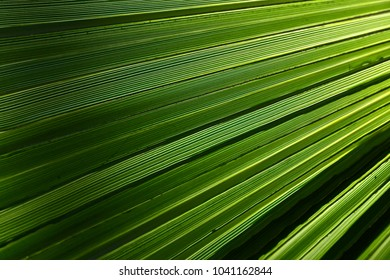 The sunlight  illuminates this palm showing off  its many shades of  green