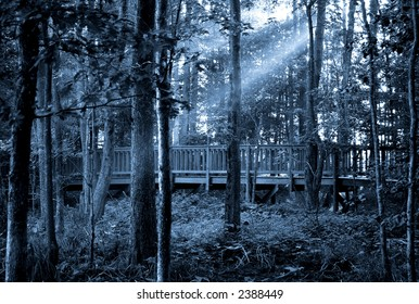 sunlight or moonlight  through the trees