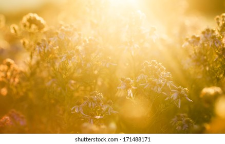 Sunlight on the field,flowers in the sunshine