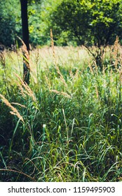 Sunlight on grass, lomography, Woodland, UK