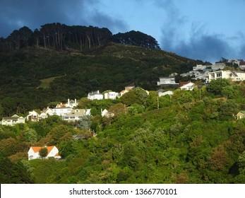 Sunlight on hillside houses in suburb of Wadestown, Wellington New Zealand