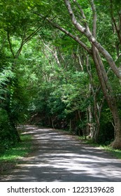 Sunlight on this nature trail through the woods.Lots of lush foliage in mid spring.