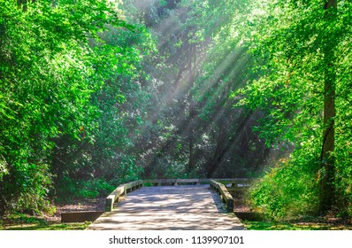 Sunlight on the Trail