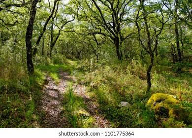 Sunlight over green forest spring summer