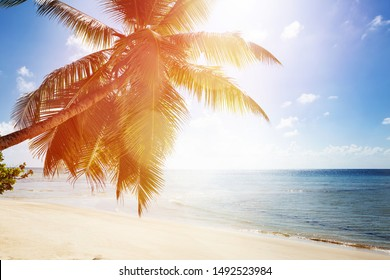 Sunlight Over The Palm Tree Near The Idyllic Sea