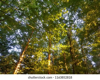 Sunlight over trees in summer