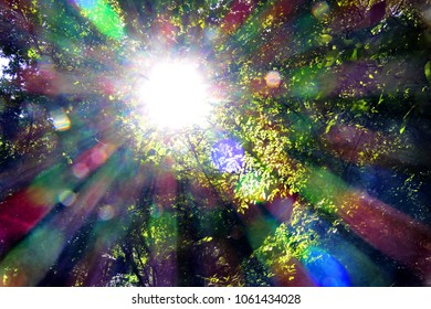 Sunlight passes through the branches of the trees. Backlight, decomposition of light.