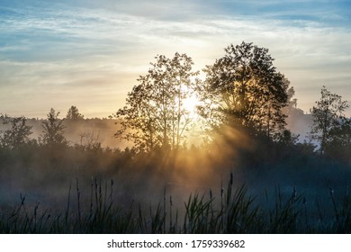 Sunlight penetrates tree branches during sunrise