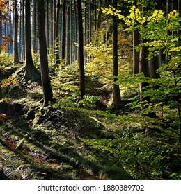 Sonnenlicht durchdringt den dunklen Wald