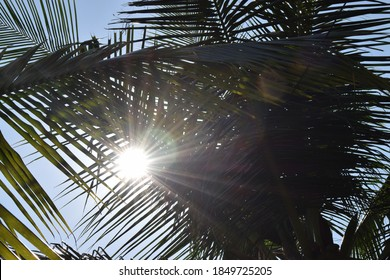 Sunlight rays coming through the coconut leaves , wallpaper of direct sunlight, sunlight wall paper, sun sun, natural sun rays coming through the thin leaves , beautiful sunrays falling through forest - Shutterstock ID 1849725205