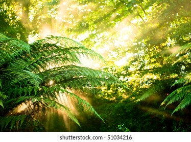 Sunlight rays pour through fern leaves in a rainforest at New Zealand