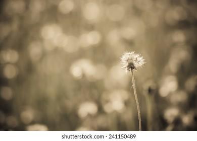Sunlight reflected flower