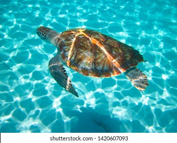 Sunlight reflects off the back of a green sea turtle (chelonia mydas) as it swims.Sunlight sparkles on the sandy ocean floor in the background as the creature is viewed from above - Image
