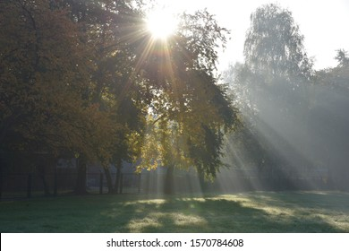 Sunlight shining on treetops. At Oswiecim city,Poland .In October 2019.