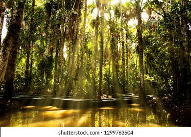 Sunlight shining through palm trees on a boat at the Amazon rainforest in Peru