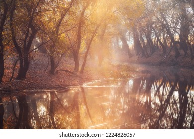Sunlight shining through the trees on the banks of beautiful river in autumn