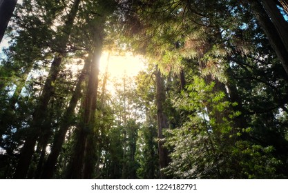 Sunlight is shining through the void of trees, wild of relax, emanated light at the forest.
