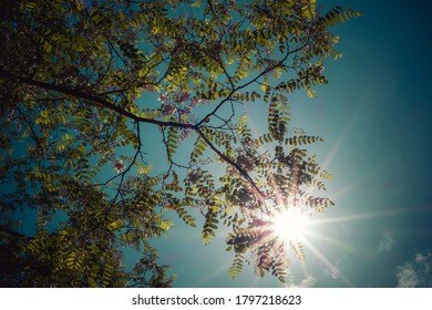 sunlight shining trough the leaves