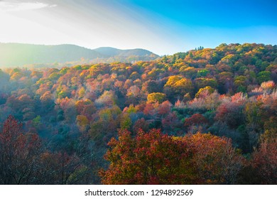The sunlight is streaming over the treetops, creating a spectacular array of Autumn color along the Blue Ridge Parkway in the Smoky Mountains of North Carolina.