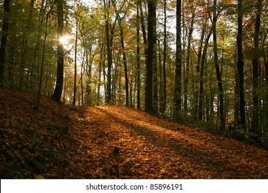 sunlight streaming through forest in fall (horizontal)