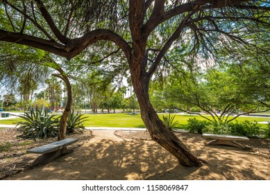 Sunlight streams through a native mesquite tree in Encanto Park's Garden of Dreams in Phoenix, Arizona.