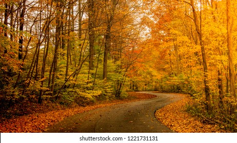Sunlight through autumn foliage on trees highlighting gold, green, yellow and orange colors over winding country road surrounded by leaves on the ground in rural midwestern Indiana.