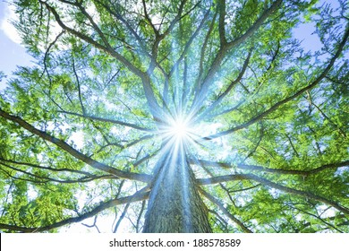 Sunlight through a big tree