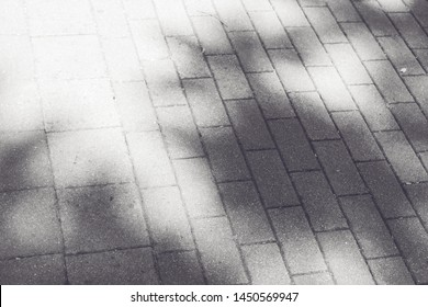 Sunlight through foliage. Shadow from foliage on paving slabs