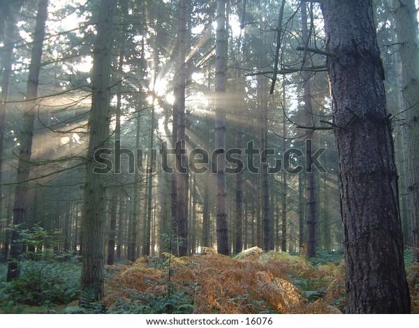 sunlight through misty forest