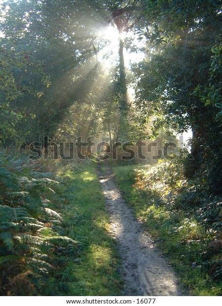sunlight through misty forest path