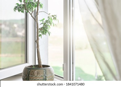 sunlight through open window with white frame and with houseplant on sill lighting in room in early morning close view