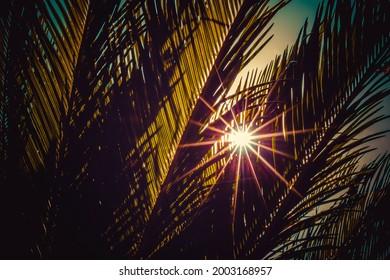 Sonnenlicht durch eine Palme