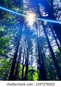 Sunlight through trees from the Mattatuck Trail forest that winds through Litchfield County and New Haven County at the top of Black Rock in Western Connecticut United States.