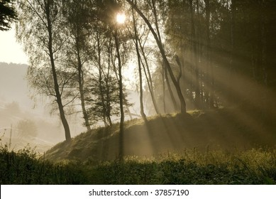 Sunlight through the trees and mist