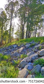Sunlight Through Trees on Rocks